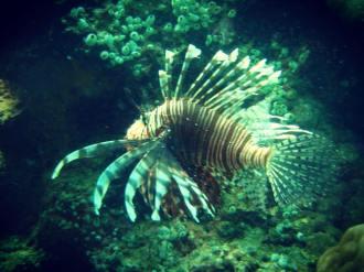 海底世界妙妙妙